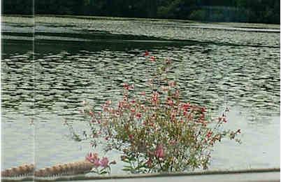 chateau-de-brindos-lac-fleurs