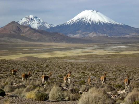 Parinacota Vulkan Chile