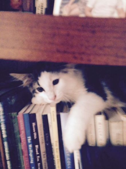 scliterary-cat