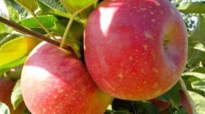 Frutta-biologica