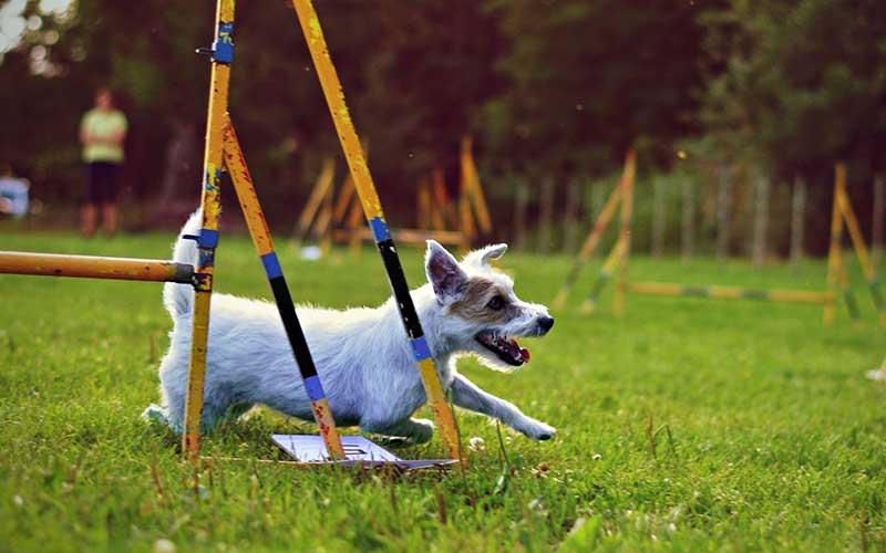 Addestriamo cani, anche in mutande se necessario