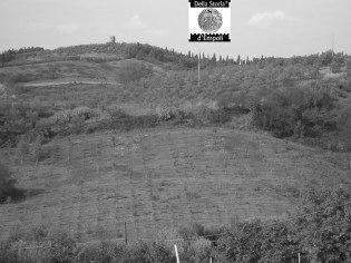 Paesaggio Campagna Monterappoli