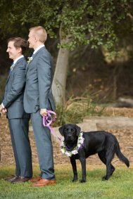 olive the flower girl dog