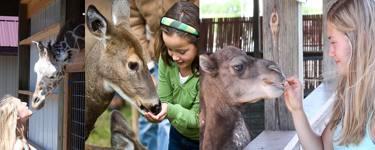 Close-up Animal Encounters As Presented By Meadowbrook Resort & Dells Packages In Wisconsin Dells