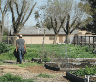 Eric Firpo tends to other crops and a set of beds. PHOTO BY SONYA HERRERA