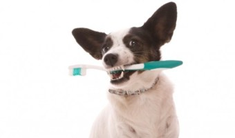 Your furry BFF needs a healthy smile, too! Learn how to care for your pooch's pearly whites: