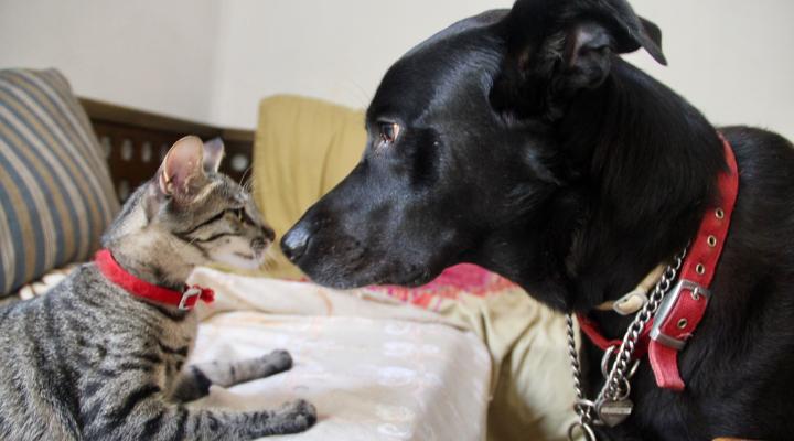Cat Teeth vs. Dog Teeth