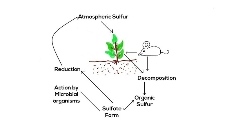 Sulphur cycle of Nature