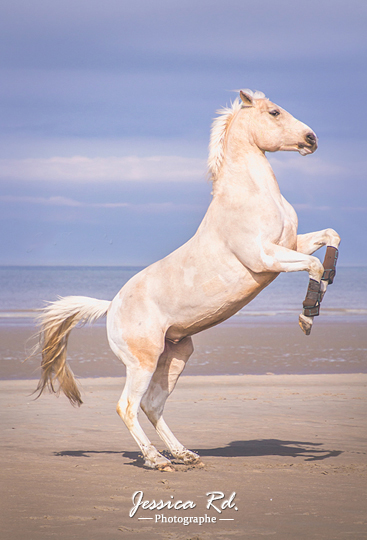 cheval-photos
