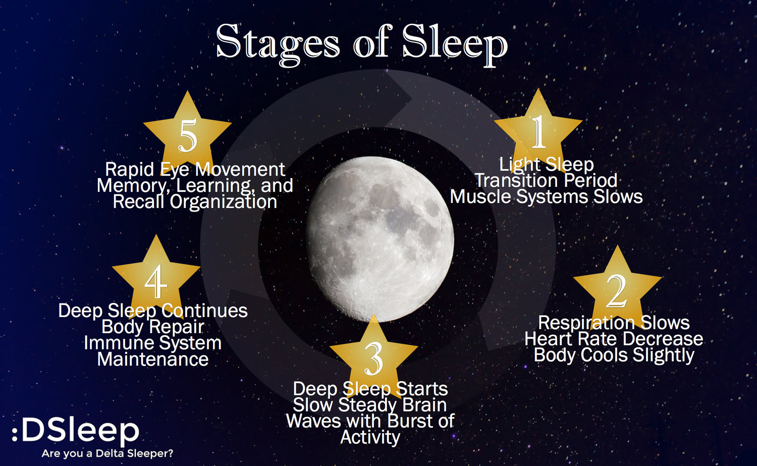 Maximize Your Sleep Stages Of Sleep And The Sr1 By
