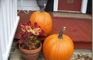 pumpkins 006