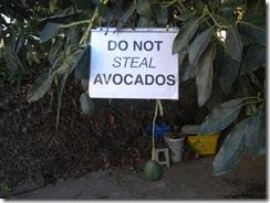 sstealing avocados