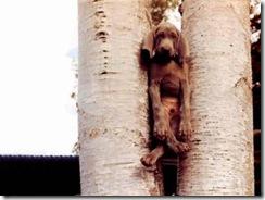 stuck-in-a-rut-dog