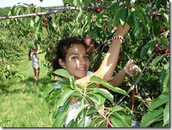 cherry_picking_with_tree