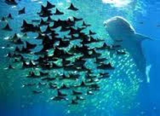 under-sea