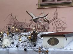 Les cigognes d'Alsace ne migrent plus vers les pays chauds depuis longtemps...