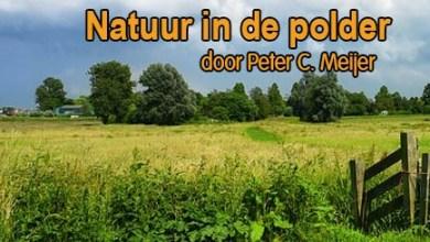 Photo of 'En ons altijd weer boeit' door Peter C. Meijer – Tuinvogeltelling