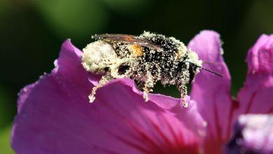 Photo of Insectenvriendelijk tuinieren bij Rundveemuseum op 30 augustus