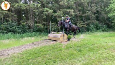 Photo of Duizend paardenhoeven staan te trappelen voor spektakel in Dijkgatbos