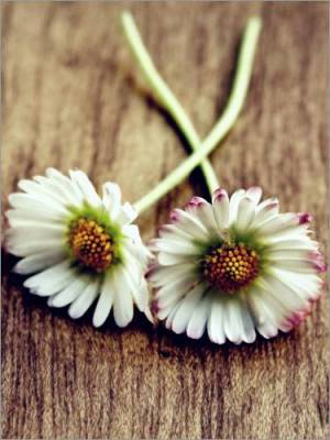Hand-picked Daisies Modern Image Wall Art