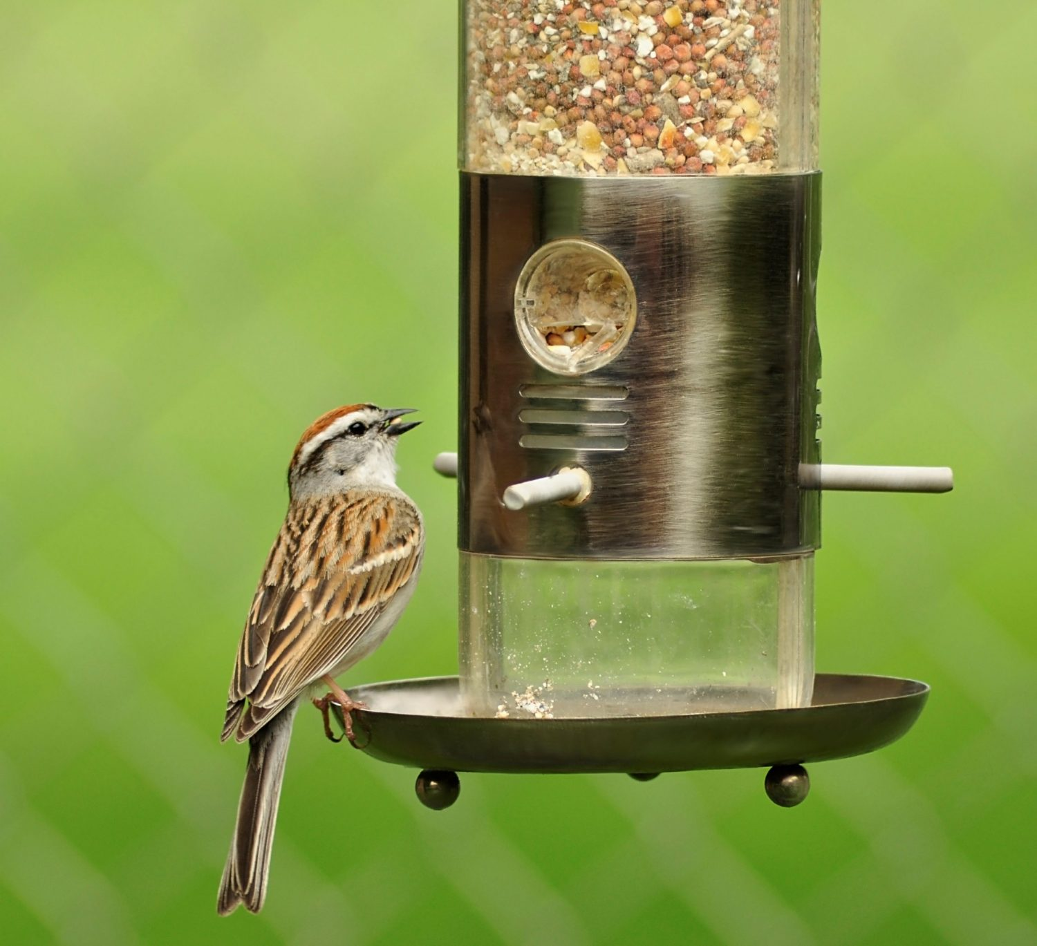 Bird Feeder - Help residents stay active at www.dementiaworkshop.co.uk