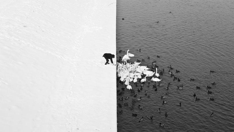 animals in winter 10 - 19 lindas fotografias de animais selvagens durante o inverno