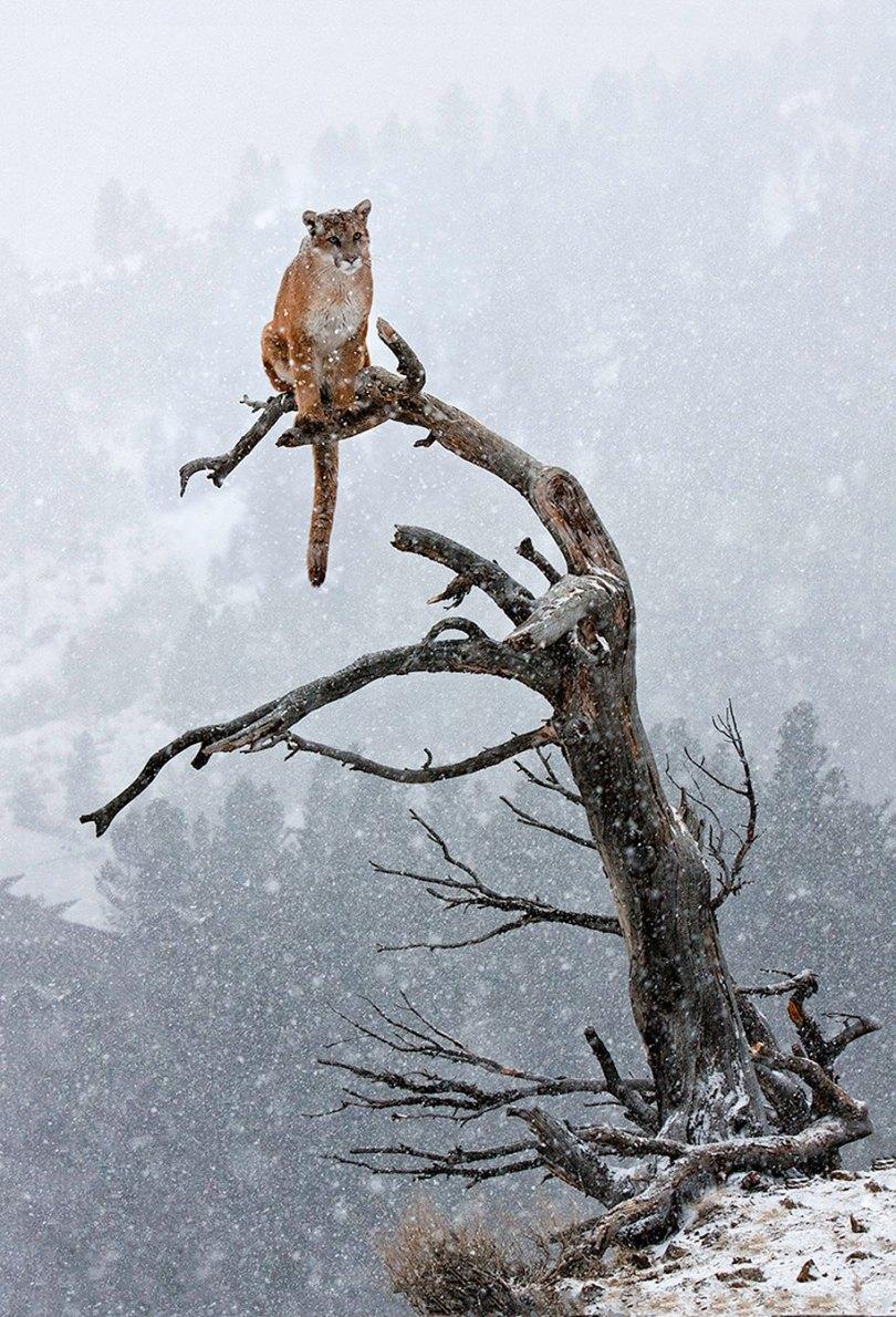 animals in winter 13 - 19 lindas fotografias de animais selvagens durante o inverno