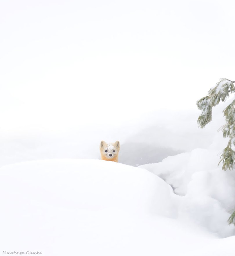 animals in winter 14 - 19 lindas fotografias de animais selvagens durante o inverno