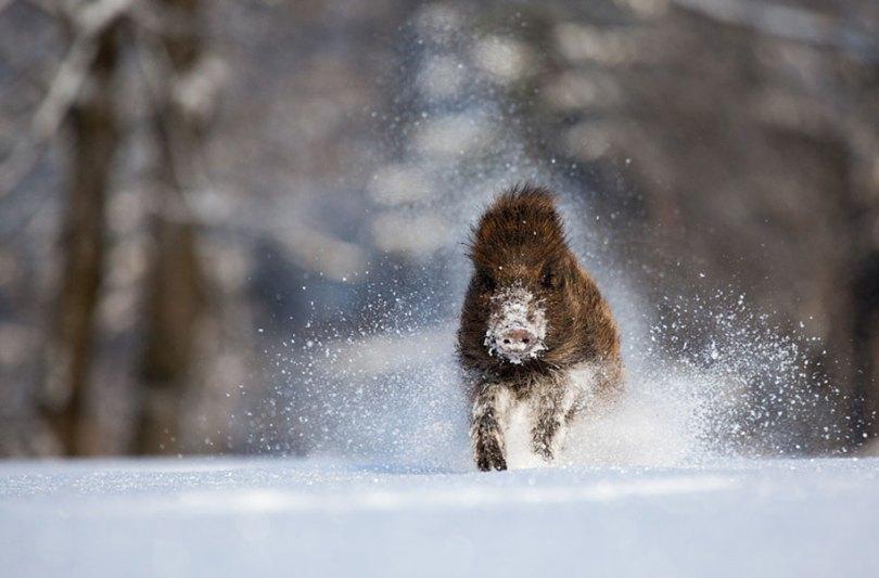 animals in winter 16 2 - 19 lindas fotografias de animais selvagens durante o inverno