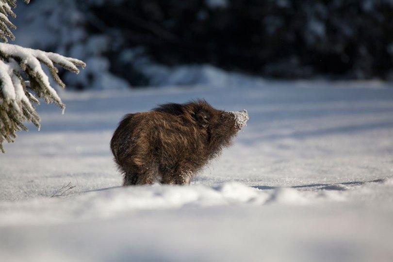 animals in winter 16 - 19 lindas fotografias de animais selvagens durante o inverno