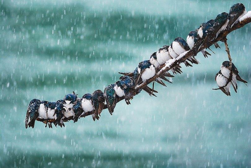 animals in winter 3 - 19 lindas fotografias de animais selvagens durante o inverno