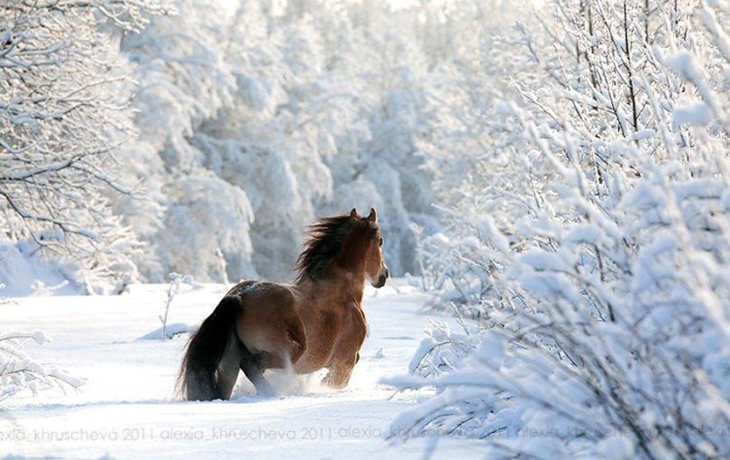 animals in winter 8 - 19 lindas fotografias de animais selvagens durante o inverno