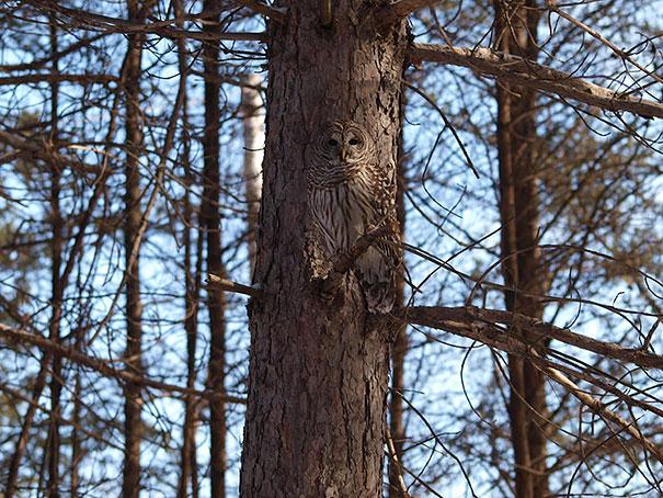 owls-comouflage-nature-photography-16