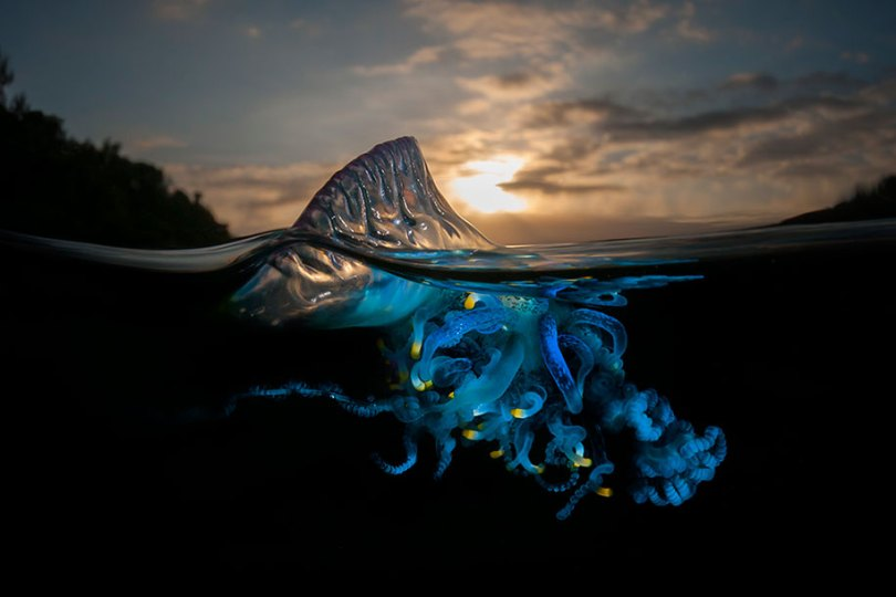 surface half underwater photography over under matty smith 13 - Fotografias espetaculares subaquáticas de Matty Smith
