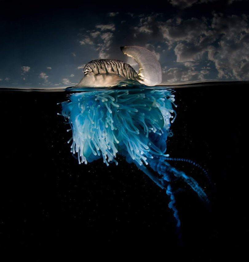 surface half underwater photography over under matty smith 17 - Fotografias espetaculares subaquáticas de Matty Smith