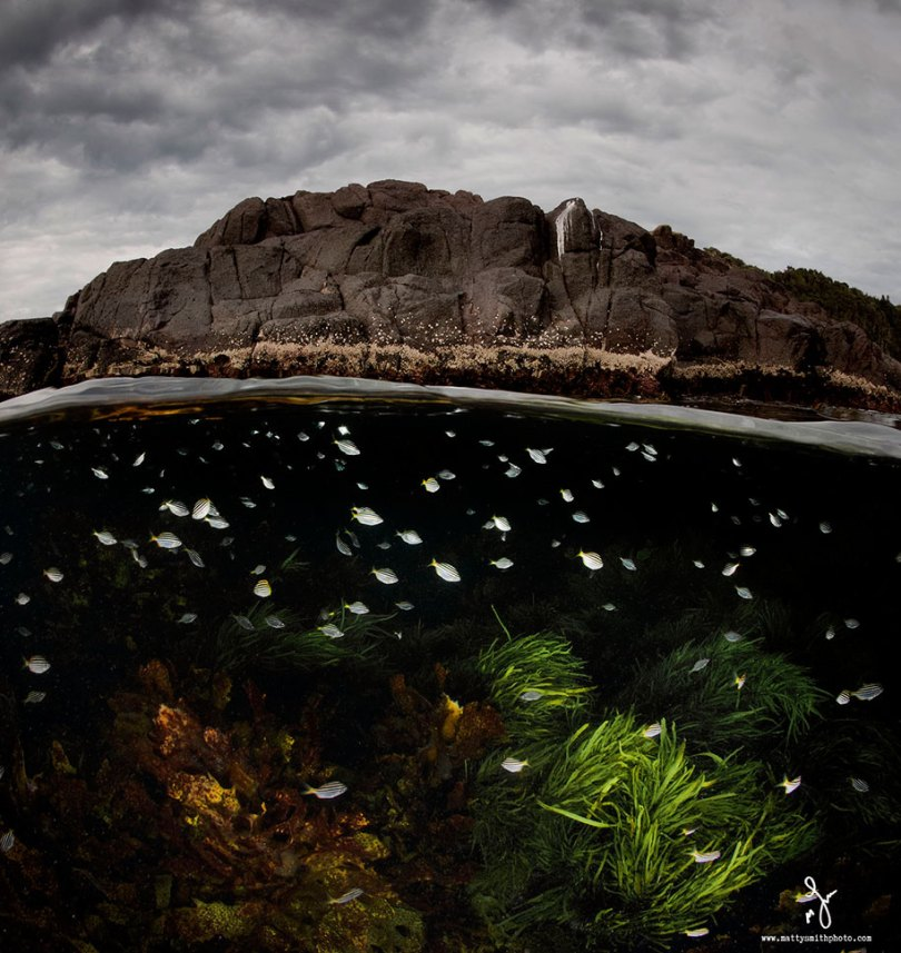 surface half underwater photography over under matty smith 7 - Fotografias espetaculares subaquáticas de Matty Smith