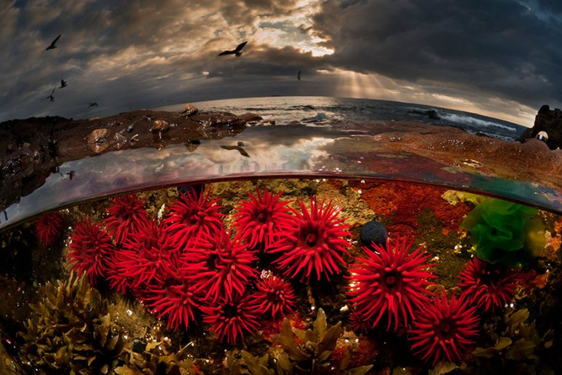 Superfície-metade-subaquática-fotografia-over-under-matty-smith-8