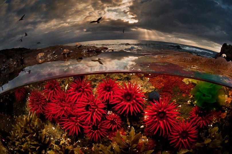 surface half underwater photography over under matty smith 8 - Fotografias espetaculares subaquáticas de Matty Smith