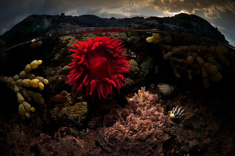 surface half underwater photography over under matty smith 9 - Fotografias espetaculares subaquáticas de Matty Smith