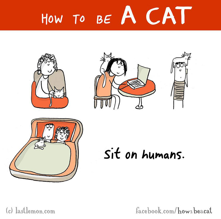 How To Be A Cat In 23 Easy Steps DeMilked