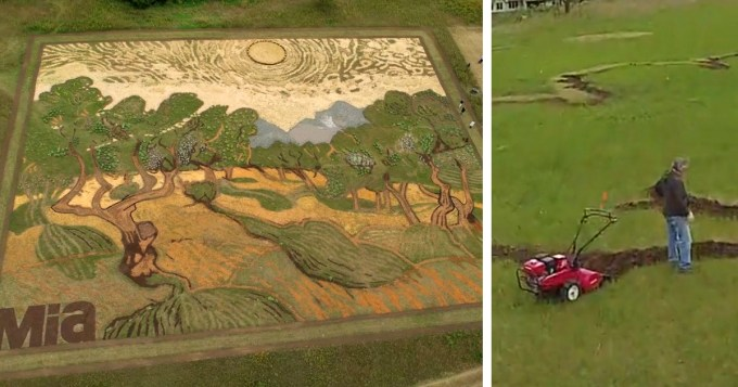 Artist Spends 6 Months Planting 1.2 Acres To Recreate Van ...