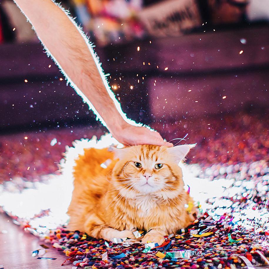 professional-cat-photography-kotleta-cutlet-kristina-makeeva-hobopeeba-10