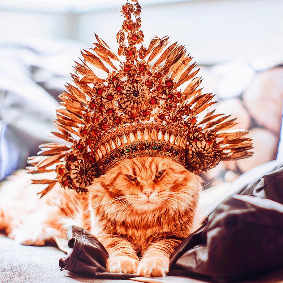 professional-cat-photography-kotleta-cutlet-kristina-makeeva-hobopeeba-22