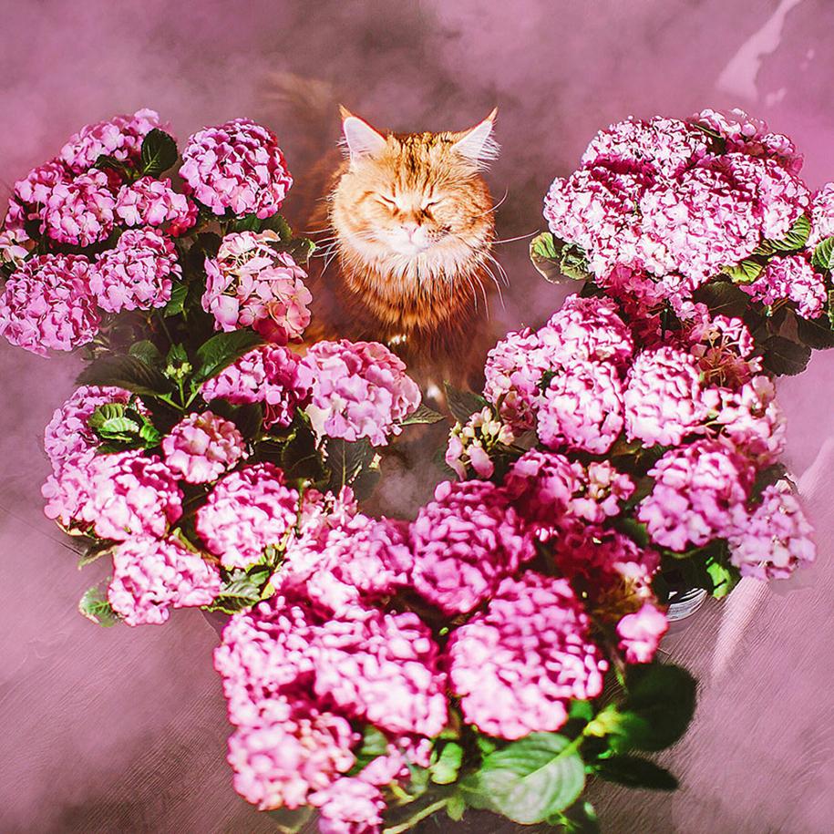 professional-cat-photography-kotleta-cutlet-kristina-makeeva-hobopeeba-23