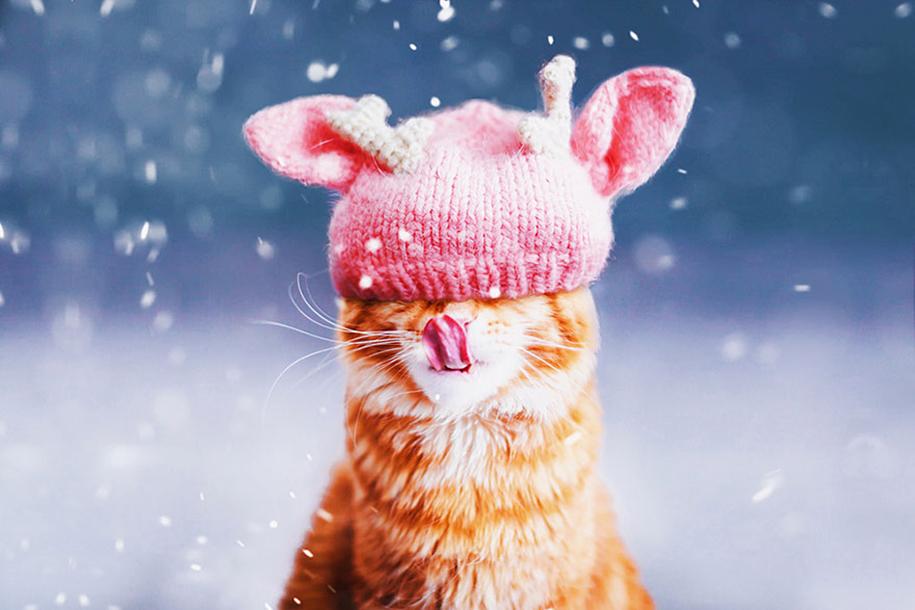 professional-cat-photography-kotleta-cutlet-kristina-makeeva-hobopeeba-25