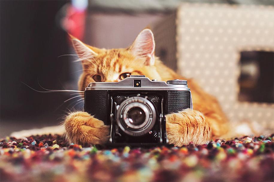 professional-cat-photography-kotleta-cutlet-kristina-makeeva-hobopeeba-26
