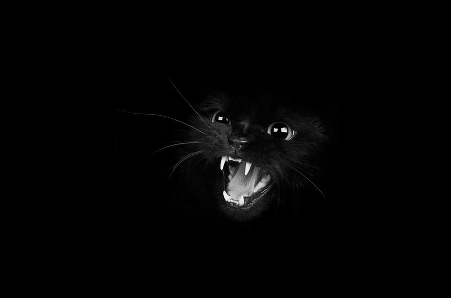 mysterious-cats-black-and-white-portraits-12