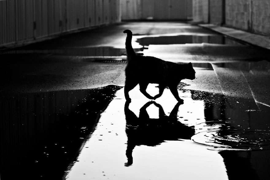 mysterious-cats-black-and-white-portraits-7