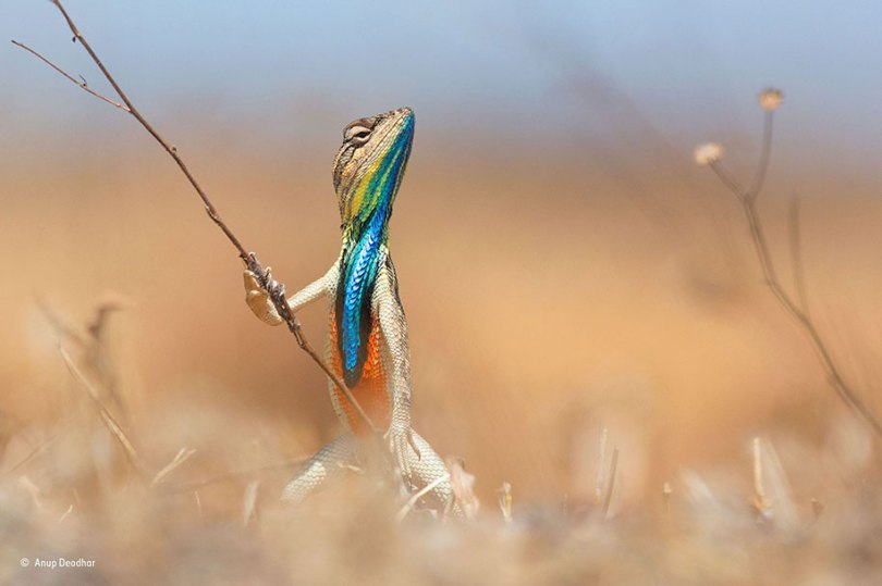 comedy wildlife photography awards best photos 2016 18 - As fotos profissionais mais engraçados do mundo animal (Parte 2)