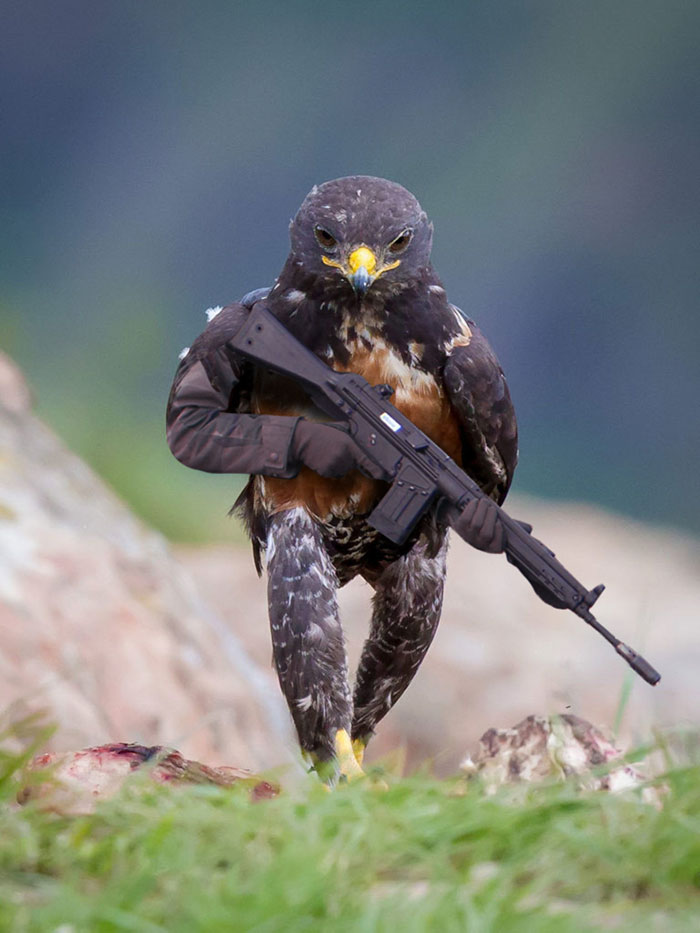 funny-badass-hawk-photoshop-battle-1